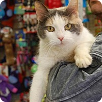 Adopt A Pet :: Kiwi - Brooklyn, NY