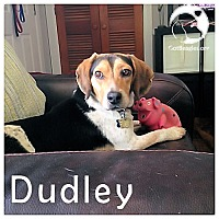 Adopt A Pet :: Dudley - Chicago, IL