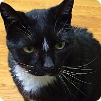Adopt A Pet :: Rocky - St. Louis, MO