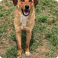 Adopt A Pet :: Miles - Woodward, OK
