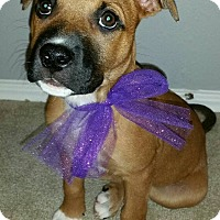 Adopt A Pet :: Lady - Broken Arrow, OK