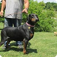 Adopt A Pet :: DEBBIE  (big girl) - WOODSFIELD, OH