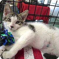 Adopt A Pet :: Tucker - Fort Wayne, IN