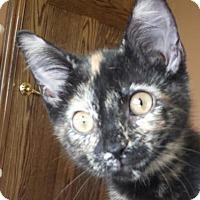 Adopt A Pet :: Tori - Colfax, IA