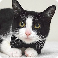 Adopt A Pet :: Warbler - Dublin, CA