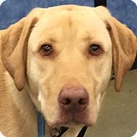 Adopt A Pet :: Rubio - Orlando, FL