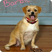 Adopt A Pet :: Barbie - Valparaiso, IN