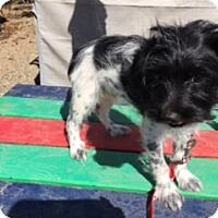 Adopt A Pet :: REID - Elk Grove, CA