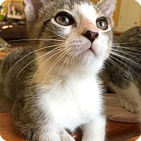Adopt A Pet :: SPIKE - Mooresville, NC