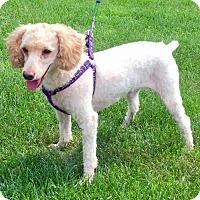 Adopt A Pet :: Jax - Rochester, NY