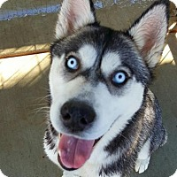 Adopt A Pet :: Lolly - Apple valley, CA