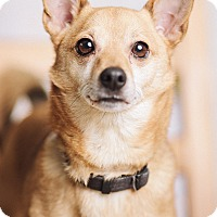 Adopt A Pet :: Chico - Portland, OR