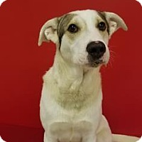 Adopt A Pet :: Roscoe - Elyria, OH