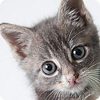 Adopt A Pet :: Peepers - Rockaway, NJ
