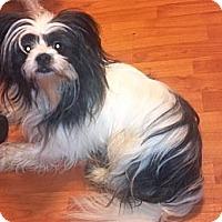 Adopt A Pet :: Sammy - Hazard, KY