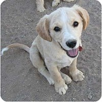 Adopt A Pet :: Harley - Golden Valley, AZ