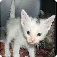Adopt A Pet :: Burble - Dallas, TX