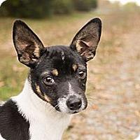 Adopt A Pet :: *Timothy - PENDING - Westport, CT