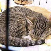 Adopt A Pet :: Dennis - Riverside, RI
