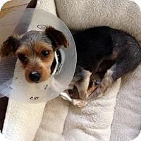 Adopt A Pet :: Rex - West Palm Beach, FL