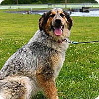 Adopt A Pet :: Meatloaf - Linden, TN