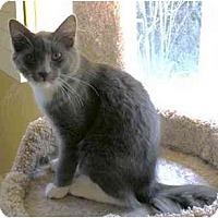 Adopt A Pet :: Mittens - Irvine, CA