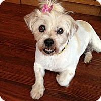 Adopt A Pet :: BITZIE - Wilmington, DE