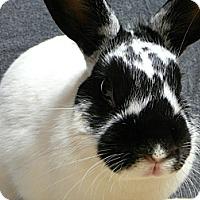 Adopt A Pet :: Mimsie - Newport, DE