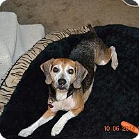 Adopt A Pet :: JACK - Van Nuys, CA