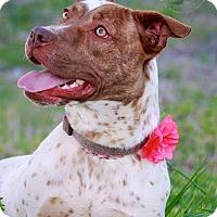 Adopt A Pet :: Molena - Albany, NY