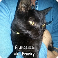 Adopt A Pet :: Francesca aka Franky - Simi Valley, CA