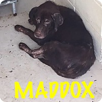 Adopt A Pet :: Maddox - Waycross, GA