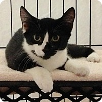 Adopt A Pet :: Joy - East Brunswick, NJ