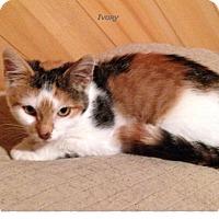 Adopt A Pet :: ivory - Warren, OH