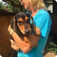 Adopt A Pet :: Isabella Adoption pending - Manchester, CT
