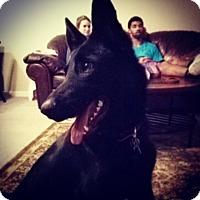 Adopt A Pet :: Rosie - Greeneville, TN