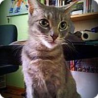 Adopt A Pet :: Winter Willow - Adoption Pending - Richmond Hill, ON