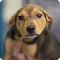 Adopt A Pet :: Delilah - Bradenton, FL
