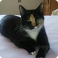 Adopt A Pet :: Kika - Bonita Springs, FL