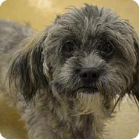 Adopt A Pet :: Cake - Miami, FL