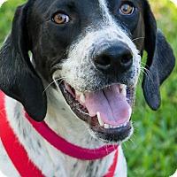 Adopt A Pet :: Bandit - Miami, FL