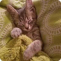 Adopt A Pet :: Miss Maggie - Ortonville, MI