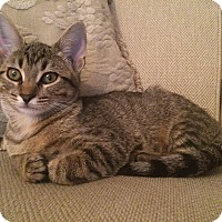 Adopt A Pet :: Peaches - Overland Park, KS