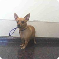 Adopt A Pet :: MALIBU - Las Vegas, NV