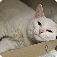 Adopt A Pet :: MIMI! - Philadelphia, PA