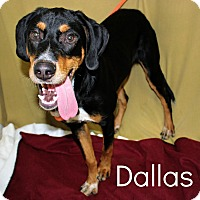 Coonhound Mix Dog for adoption in Melbourne, Kentucky - Dallas