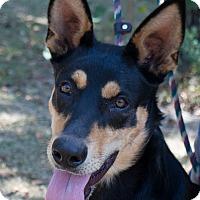Adopt A Pet :: Sheeba - Daleville, AL