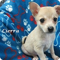 Adopt A Pet :: Cierra - Bartonsville, PA