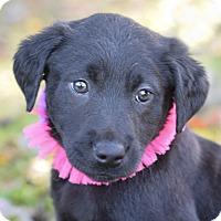 Adopt A Pet :: Lexie - Denver, CO
