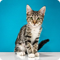 Adopt A Pet :: Columbia - Chandler, AZ